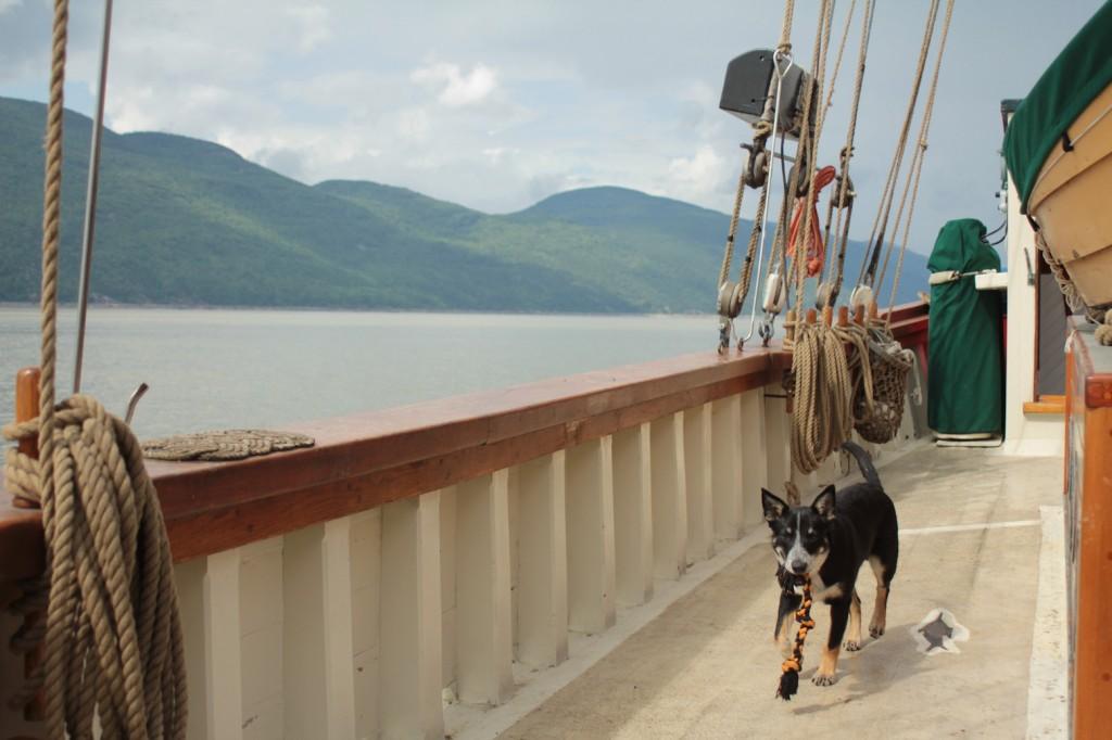 Loki running down the side deck